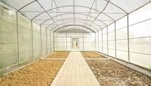 Чем обработать почву в теплице, вы решите уже после обработки конструкции и внутренних рабочих проходов