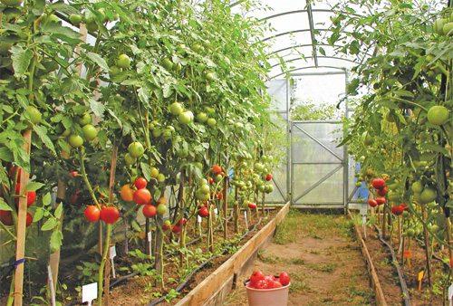 Чтобы овощи получались насыщенными витаминами, им нужно создать подобающие условия для роста