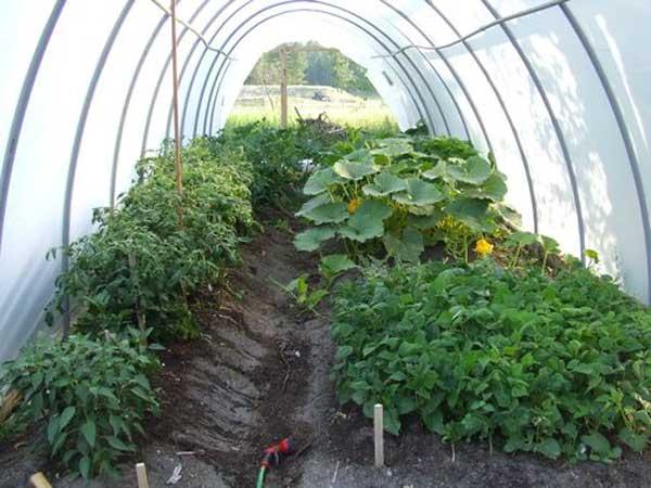 Чтобы урожай радовал вас своим обилием, теплицу нужно обогревать.