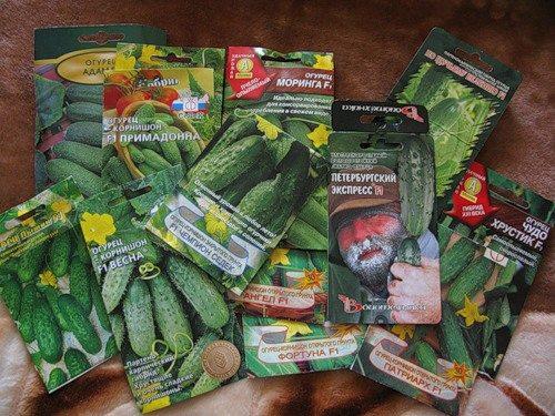 Фото семян в упаковке