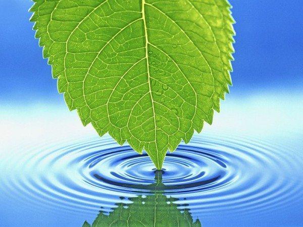 Качество урожая может напрямую зависеть от используемой воды, поэтому за ее чистотой необходимо следить отдельно