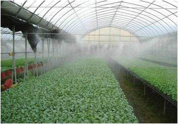 Каждый садовод мечтает получить хороший урожай, а для этого необходимо приложить максимум усилий