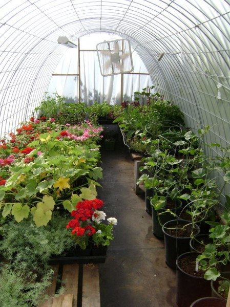 Устройство теплицы для выращивания цветов 87