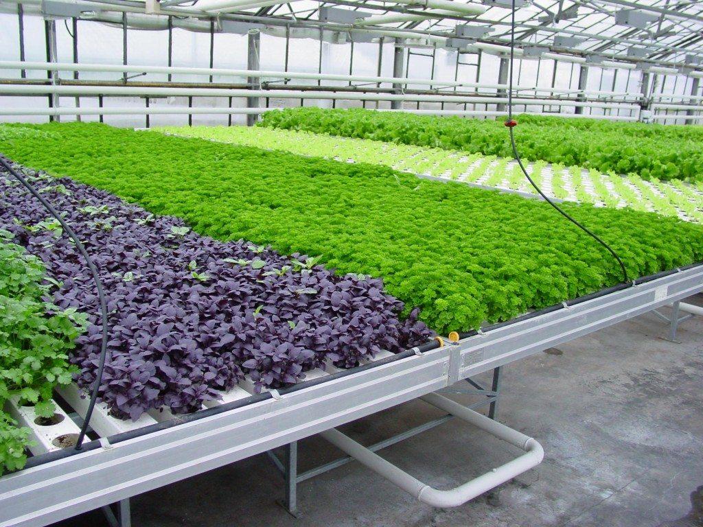 район,селение бизнес план по выращиванию мяты в теплице подробное решение