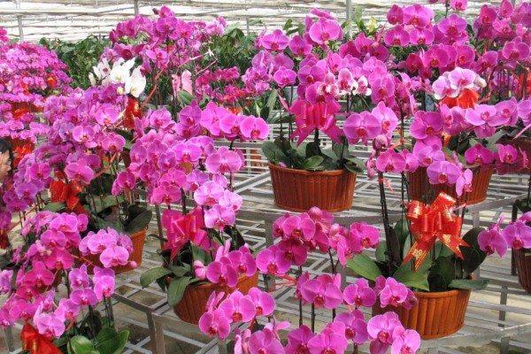 Орхидеи в красивых горшках.