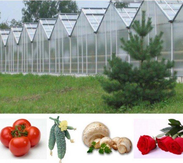 Бизнес план на теплицу по выращиванию овощей 336
