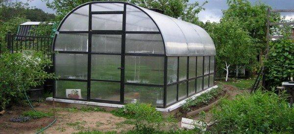 Помещение для выращивания лука зимой