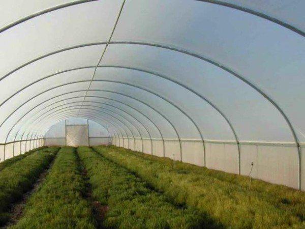 Правильно изготовленная теплица является залогом отличного урожая в любую погоду и пору года