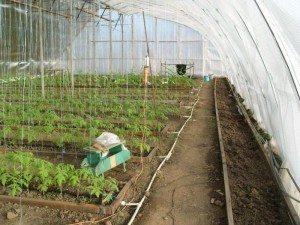 При грамотном хозяйском подходе мы будем собирать богатый урожай даже зимой.