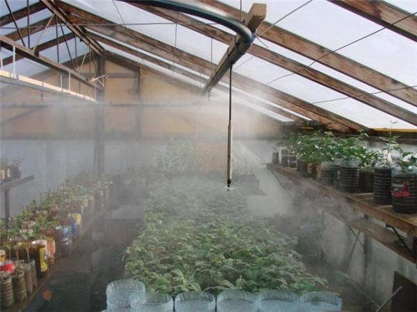 Продумываем оптимальное увлажнение и полив в теплице.