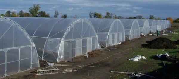Профессиональные теплицы с покрытием из пленки, применяемые в больших садовых хозяйствах