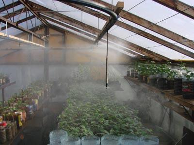 Рассада гораздое быстрее начнет развиваться в условиях искусственного тумана