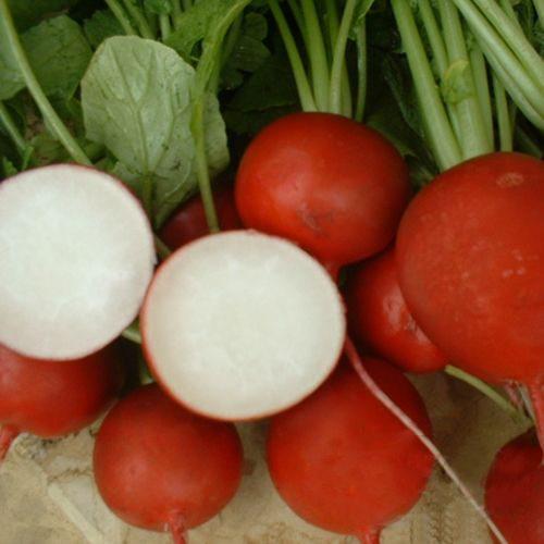 Сорт «NickersonZwaanПринто» - ранний гибрид для выращивания в теплицах.