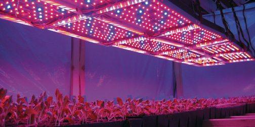 Светодиодное освещение в теплице