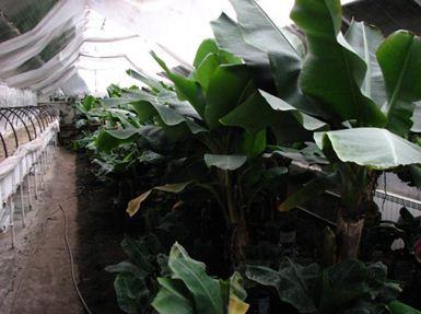 «Термос» обеспечивает отличный микроклимат и оптимальные условия для быстрого роста различных сельскохозяйственных культур.