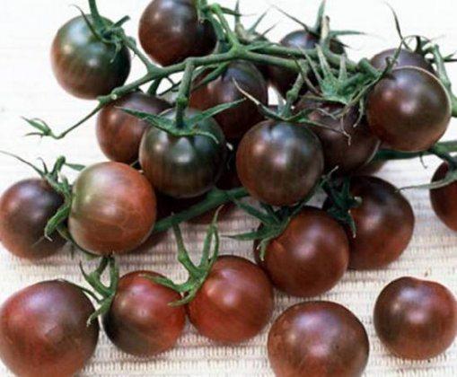 Черри – томаты с оригинальной расцветкой и изысканным вкусом