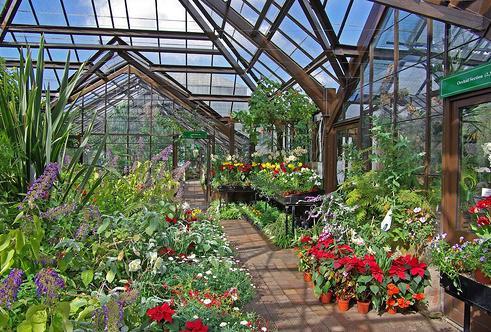 Декоративные растения в закрытом грунте