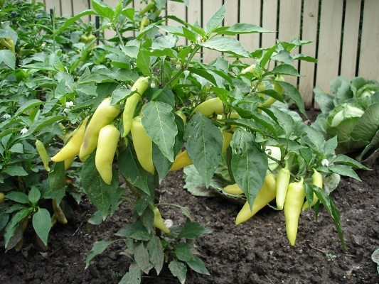 Качественный грунт – обязательное условие высокой урожайности