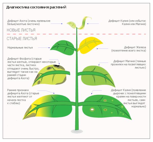 На фото изображены внешние признаки дефицита минералов у растений.