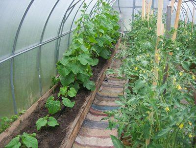 Огурцы и другие овощи в парнике