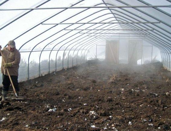 Осенняя обработка теплицы после фитофторы: удаляем все растительные остатки
