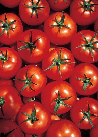 Среднеплодные томаты «Марфа».