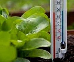 Среднесуточные показатели температуры – очень важный фактор