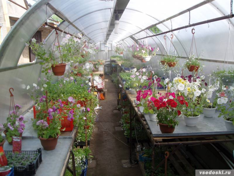 Выращивание цветов в домашних условиях на продажу