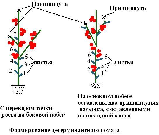 Формирование детерминантных помидоров.
