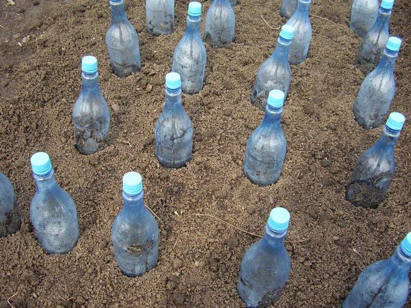 Импровизированное укрытие из пластиковых бутылок