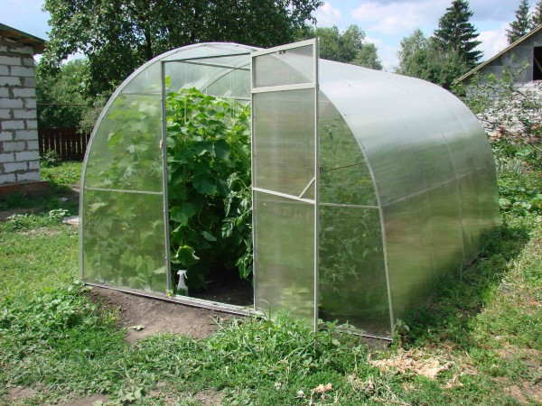 Поликарбонатные укрытия уберегут растения от сильных морозов при самом экономном их обогреве даже в северных регионах.