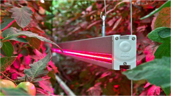 Применение ламп дневного света для выращивания томатов