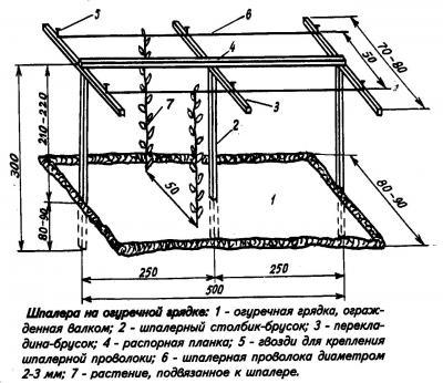 Схема огуречной грядки со шпалерой.