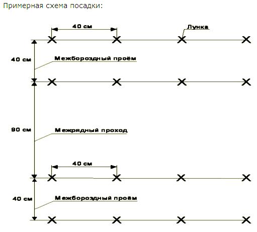 Схема-пример высадки огуречной рассады.
