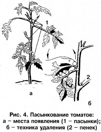 Схематическое изображение процесса