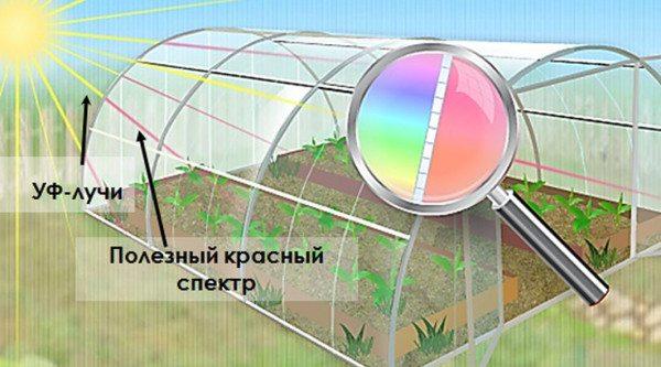 Солнечный свет и поликарбонат