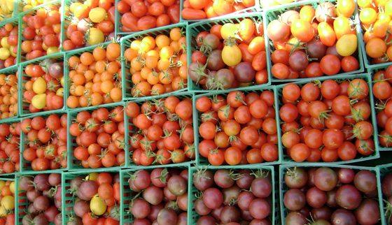 Сортовое разнообразие помидоров очень велико