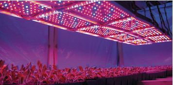 Сочетание красного и синего цвета в системе освещения позволит получить максимальные показатели роста растений в любое время года