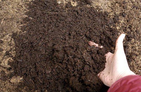 Обеззараживание грунта – первостепенная задача для дачника весной