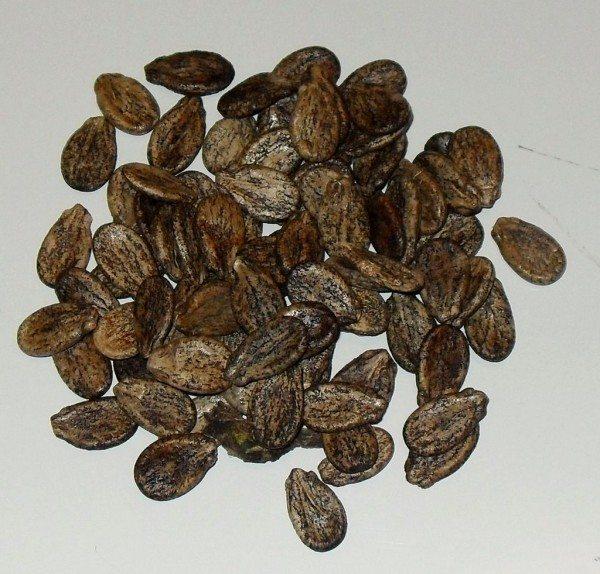 Арбузные семечки не все подойдут для выращивания вкусного арбуза в теплице, необходимо подбирать скороспелые сорта.