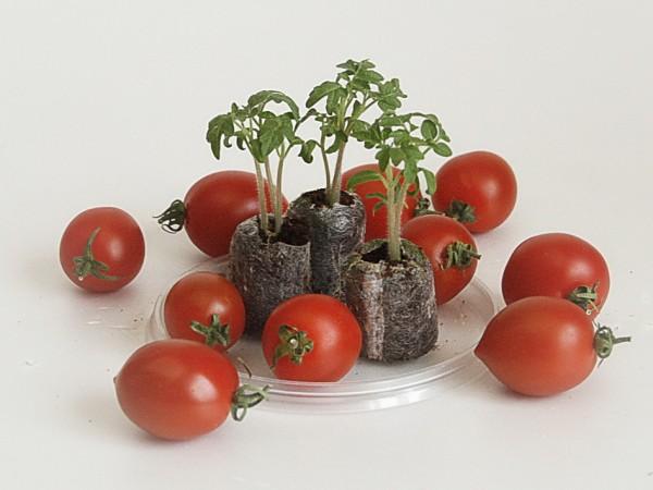 Для проращивания семян удобно использовать торфо-перегнойные таблетки, они очень хорошо удерживают влагу.