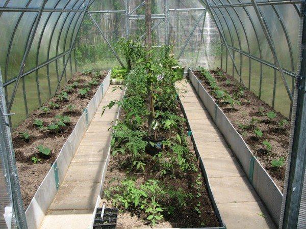 Для успешного выращивания, лучше предусмотреть отдельные конструкции для отдельных культур, либо, в крайнем случае, каждый овощ должен быть высажен на отдельную грядку.