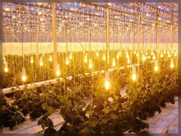 Дополнительное освещение – важный параметр в успехе этого предприятия.