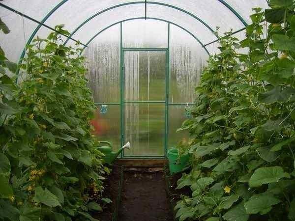 Дождь снаружи нипочём ни растениям, ни материалу самой конструкции