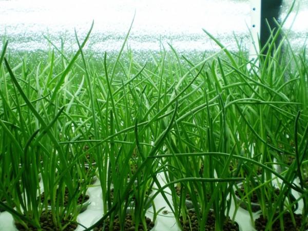 Эффективное выращивание растений в теплице может принести не только моральное удовлетворение, но и определенную прибыль