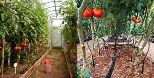 Этот вид автоматизированного полива гарантирует плодородный урожай