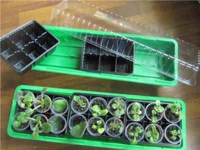 Фото мини парника для проращивания семян