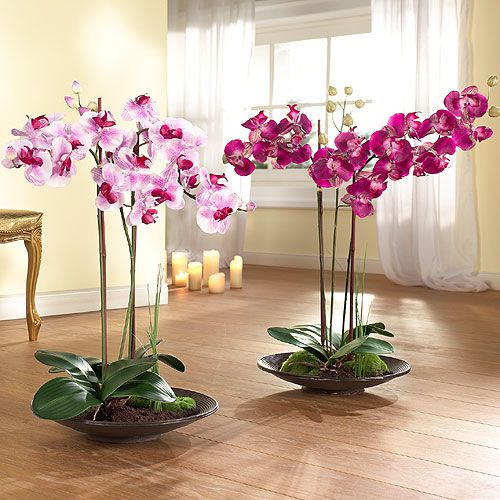 Гигантские орхидеи в интерьере квартиры.