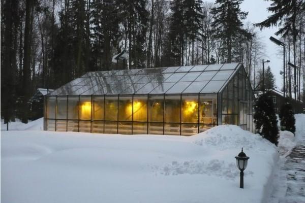 Можно ли выращивать теплолюбивые растения зимой? Безусловно. Нужен сущий пустяк: свет и тепло.