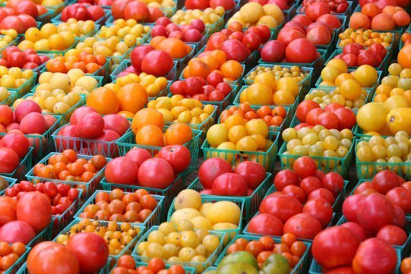 На фото изображены различные сорта тепличных томатов.
